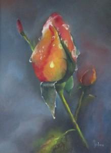 IMG_0857 roos verkleind
