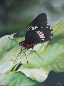 zwarte vlinder 15 maart 2015 verkleind